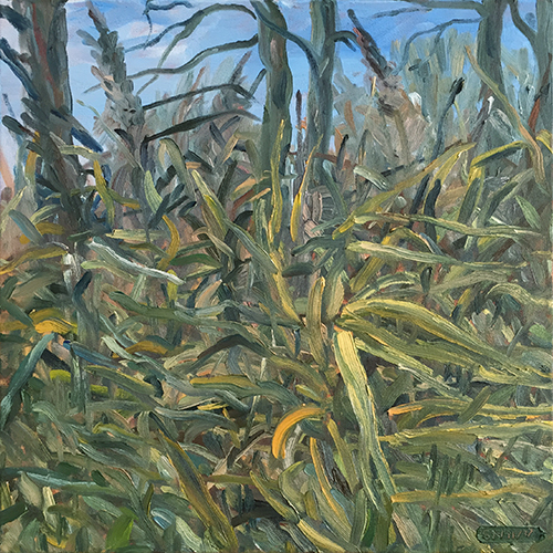 Autumn reeds, Chew Lake 2017 by Stuart Nurse