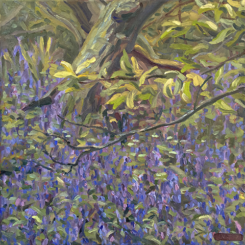 Bluebells, April 2017 by Stuart Nurse