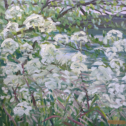 Cowparsley by the Avon near Saltford May 2017 by Stuart Nurse