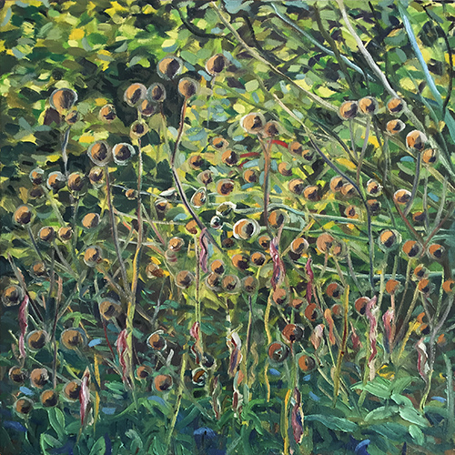Seed heads, October 2016 by Stuart Nurse