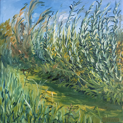 Willows in the Wind August 2017 by Stuart Nurse