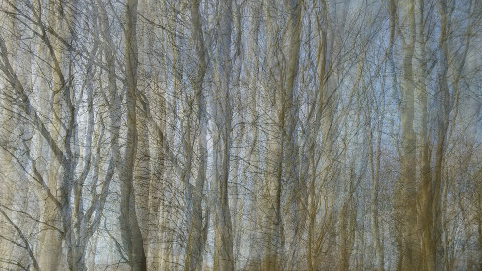 Wall of trees by John Brooks